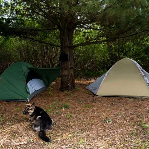 Sanctuary Camp