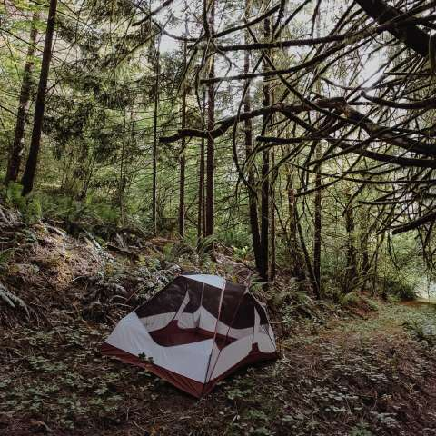 CAMPING at the POND or CREEK