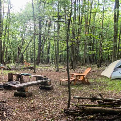 Sanctuary in the woods