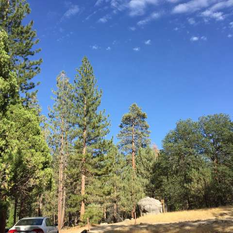 Lower Peppermint Campground