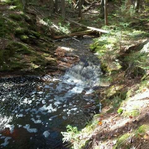 Creek, Pond, Ocean