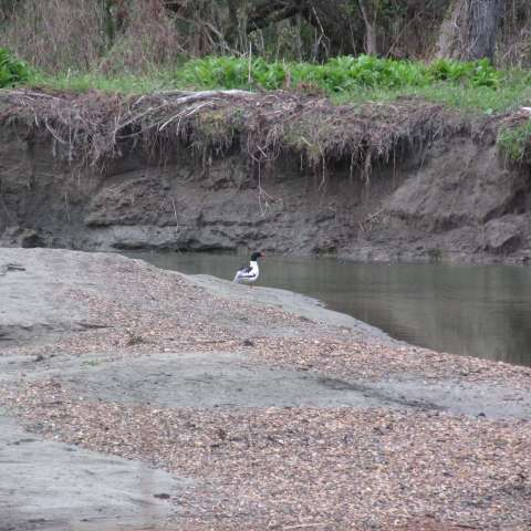 Thatcher Brook in Waterbury