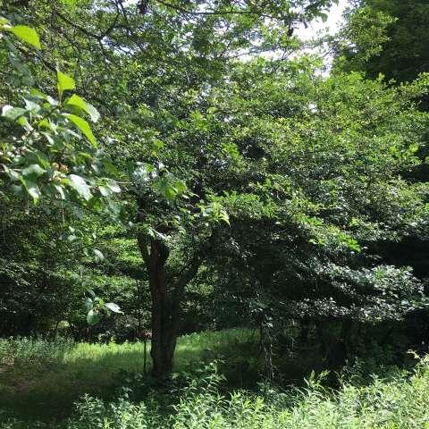 Woods Haven