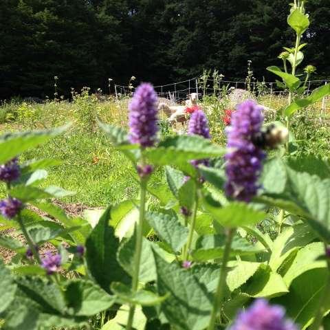 Organic Farm in the Mountains