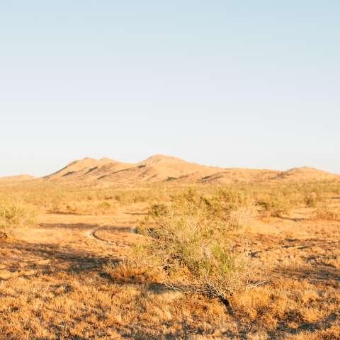 Pristine desert