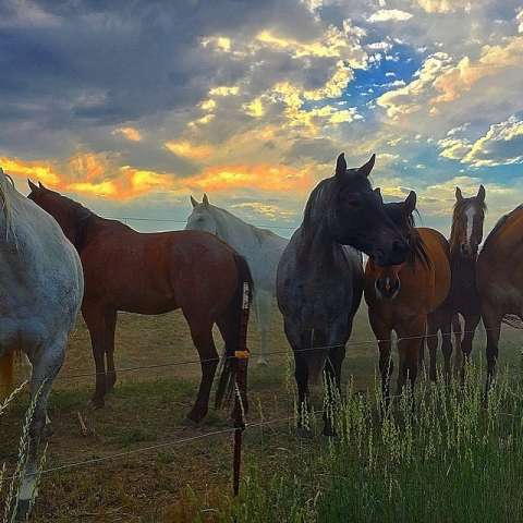 Creekside Horse Ranch Camping