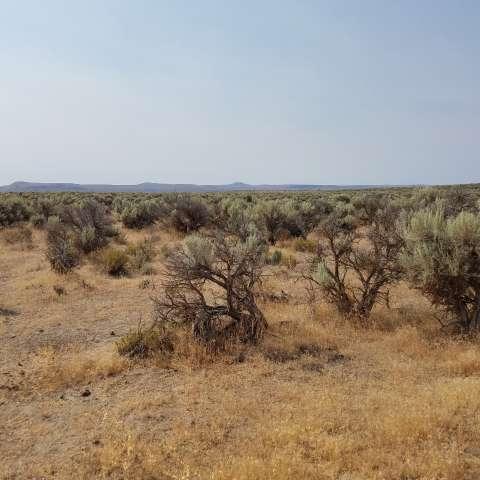 Oregon Desert Stars