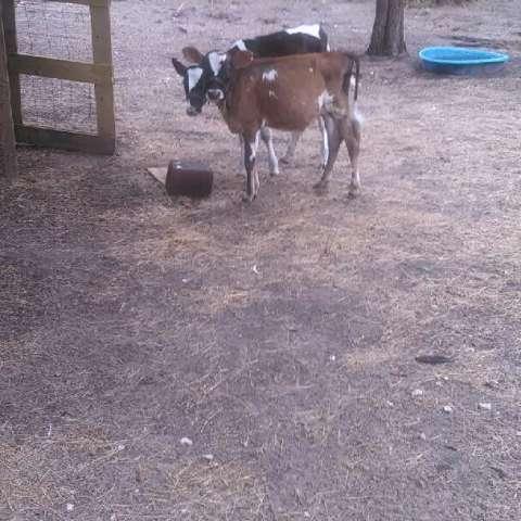 Bunny Hill Farm