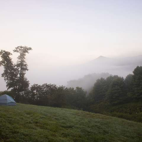 Apple Orchard Tent Camping