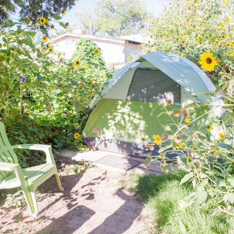 Tent in a Green Oasis