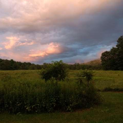 Campsite @ Rune Hill Sanctuary