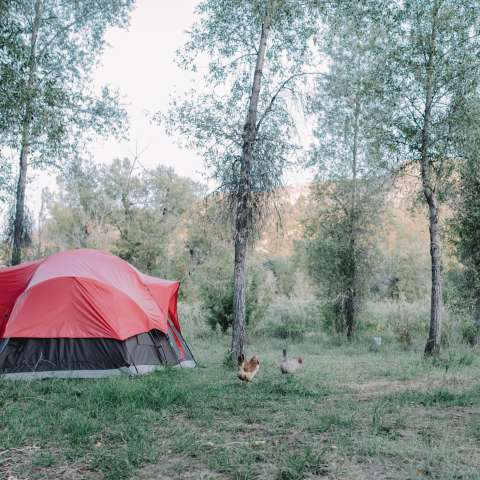 Three Canyons Blanco River Camp