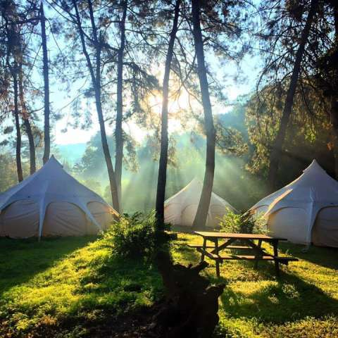 Luxury Glamping in Maui