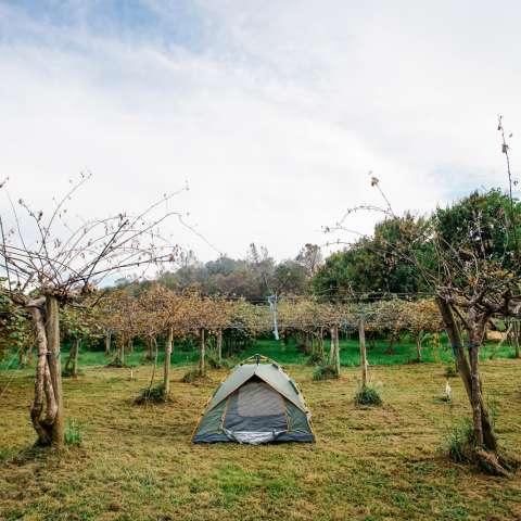 Orchard Nest