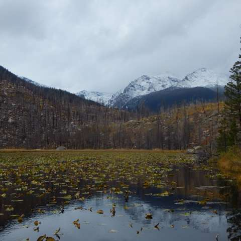 Glacier Basin Group Sites