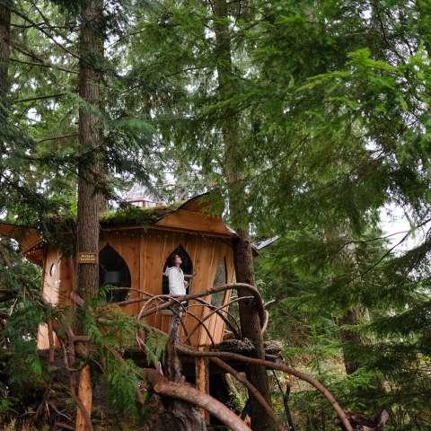 PotLeaf Treehouse