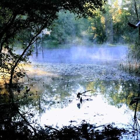 Shady Grove Preserve RV Camp