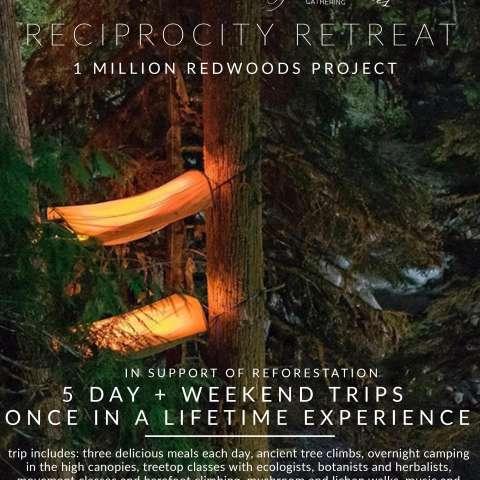 1 Million Redwoods Retreats