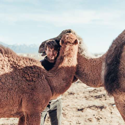 Camels and a Yurt