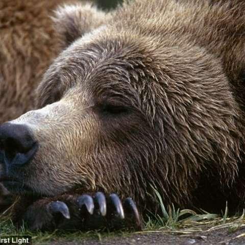 Sleeping Bear Lodge