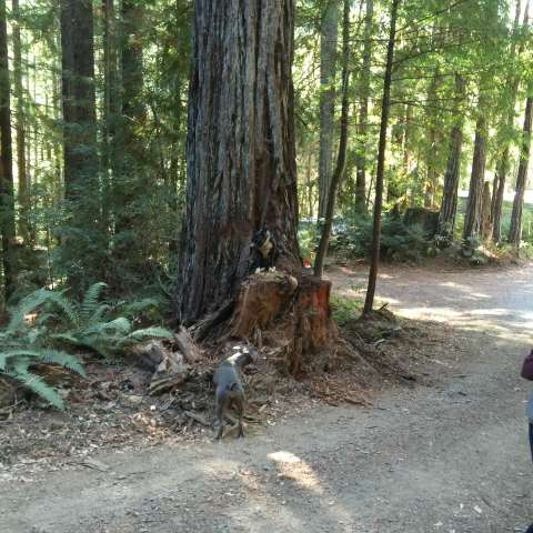 Eel River Redwoods
