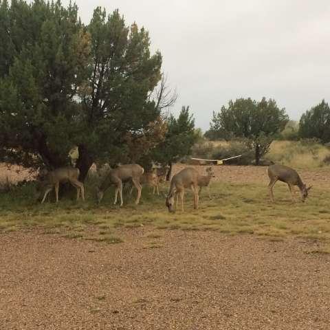 Pecos Campground