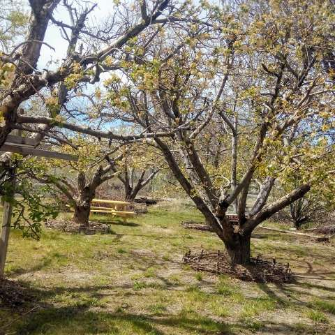 Orchard Campsite in High Desert