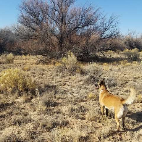 Ghost Horse Ranch