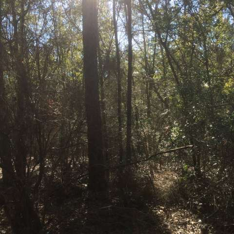 Primitive Sites at Gulf Pines