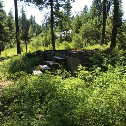 Forested Campsites