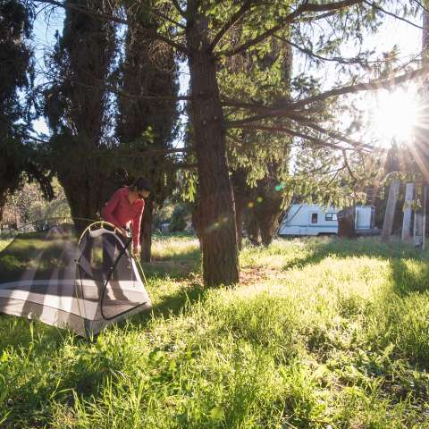 Best Dog Friendly Camps In The Redwoods California