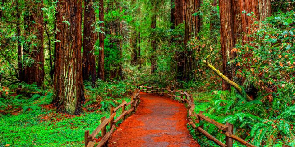 Walking Among Giants: Muir Woods National Monument