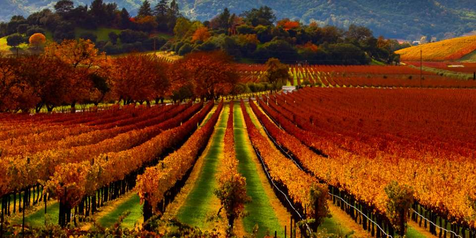 The Best Way to Wine Country