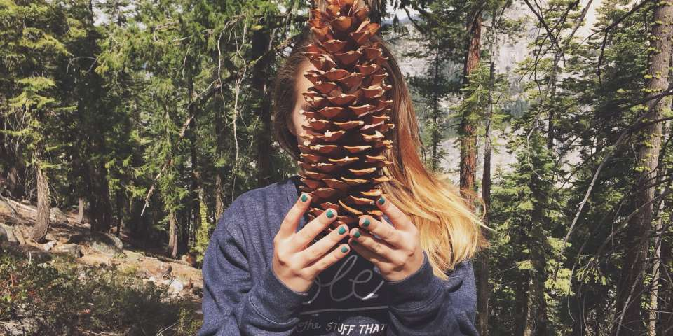 How I Learned to Embrace the Slow Food Zen of Harvesting Pine Nuts