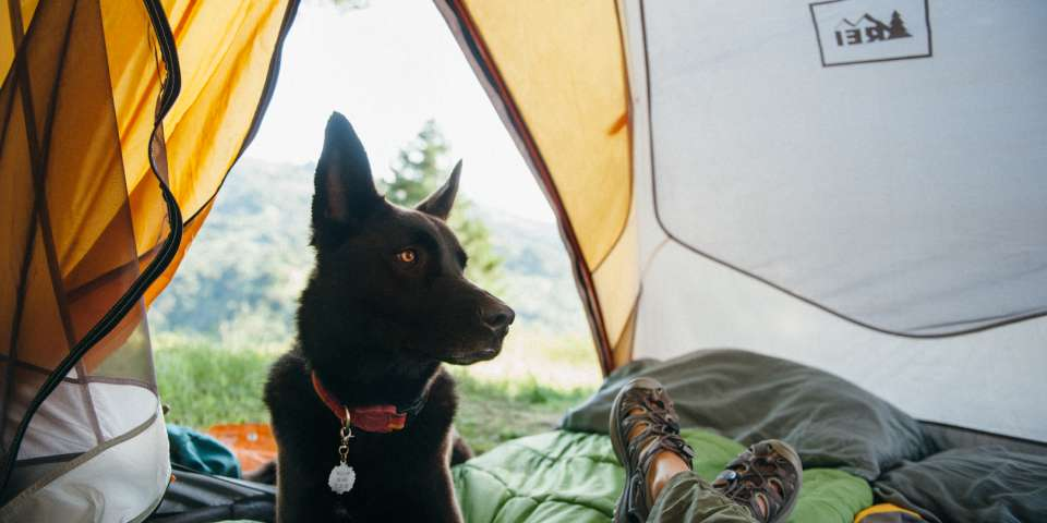 Camping with Your Dog: A Checklist