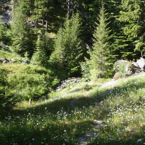 Hipcamp washington camping search the best campsite for Cabin rentals olympic national forest