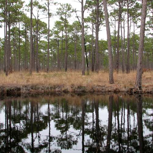 Best camping near croatan national forest north carolina for Croatan national forest cabins