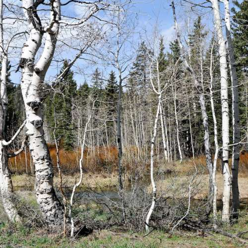 Camping Cabins National Forest Nm: Best Camping Near Grand Staircase