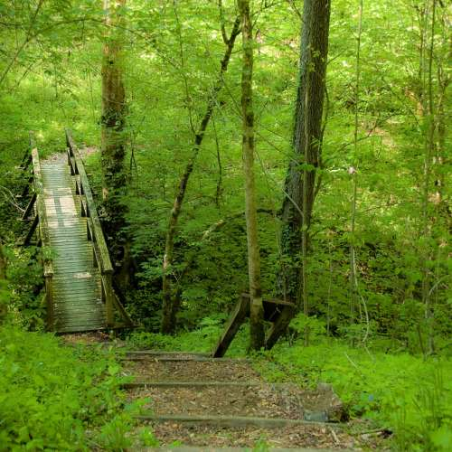 Best camping near daniel boone national forest kentucky for Daniel boone national forest cabins