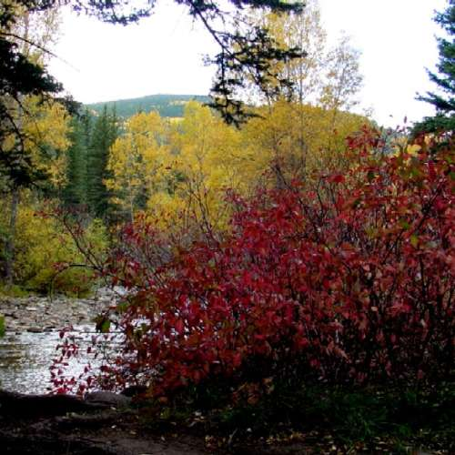 Camping Cabins National Forest Nm: Best Camping Near Carson National Forest, New Mexico With