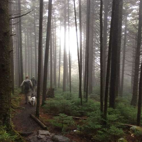 Roan Mountain State Park: Search The Best Campsite