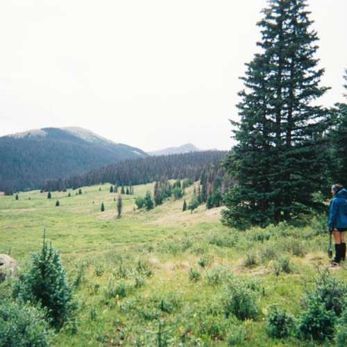 Camping Cabins National Forest Nm: San Juan National Forest, CO
