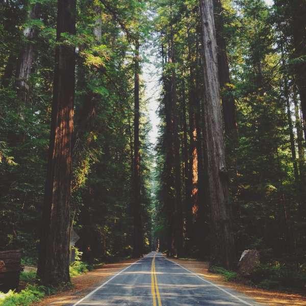 Redwood camping