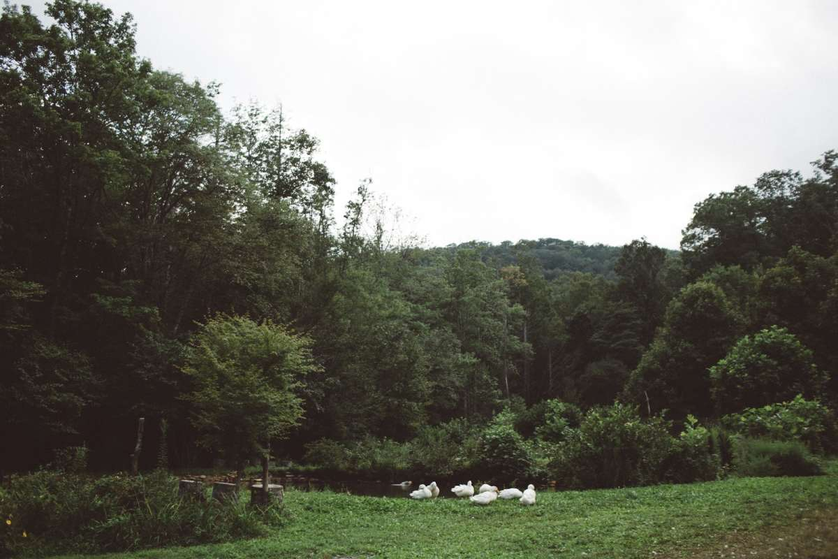 Farm Fresh Meals, Star Gazing, Peaceful Streams, and Camping Near Asheville