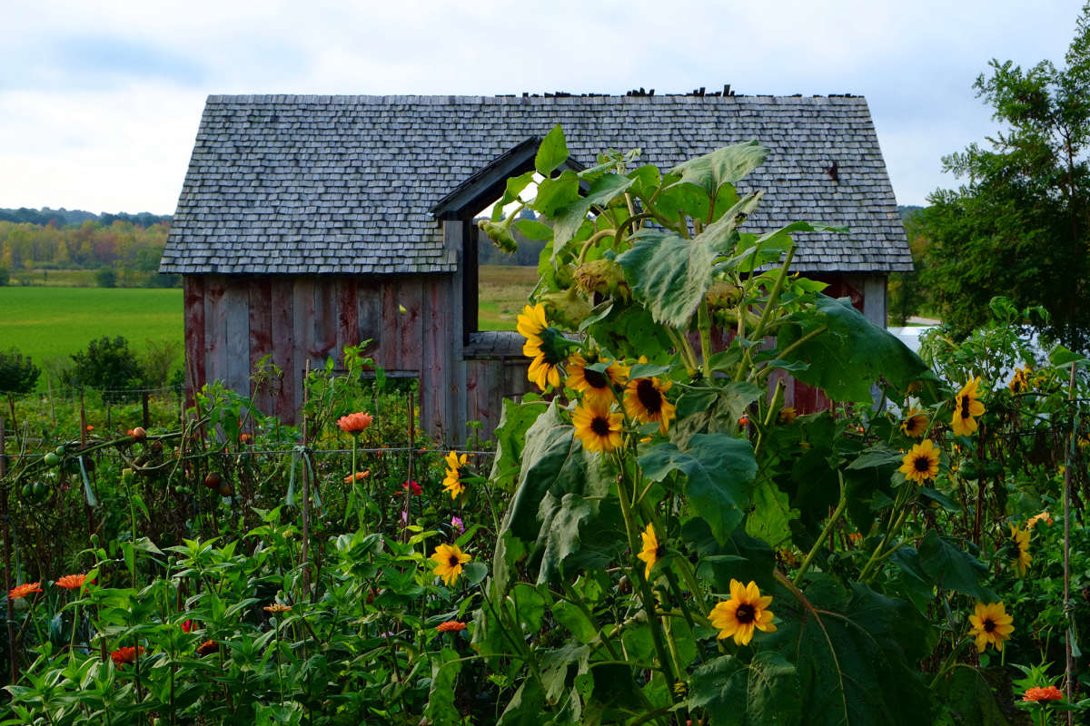 Finding Peace at Willoway Farm