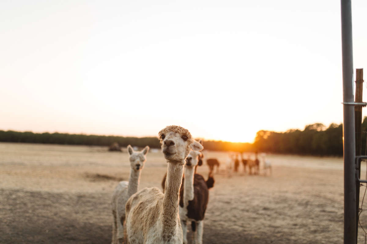 All the Farm Animals You Can Meet at a Hipcamp