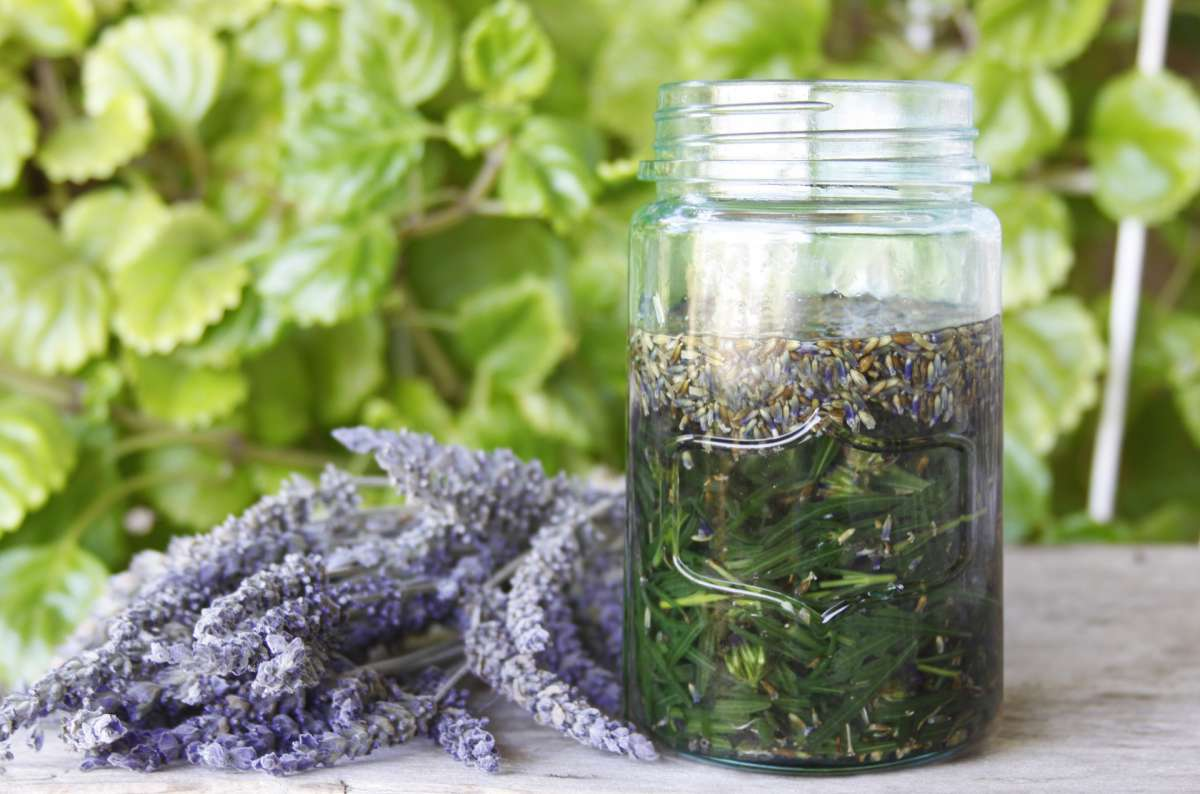 7 DIY Herbal Medicines for Campers (with Recipes!)