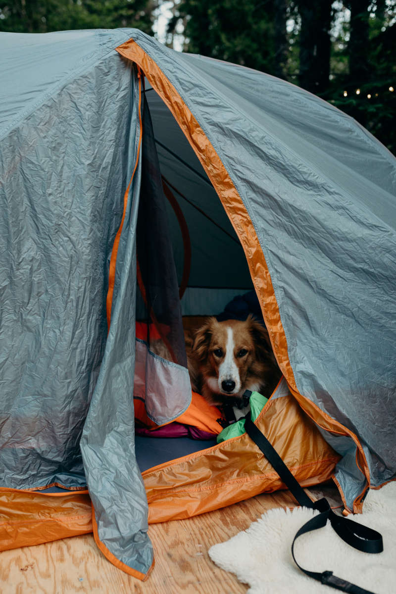 Dogs of Hipcamp | Hipcamp Journal - Stories for Campers and