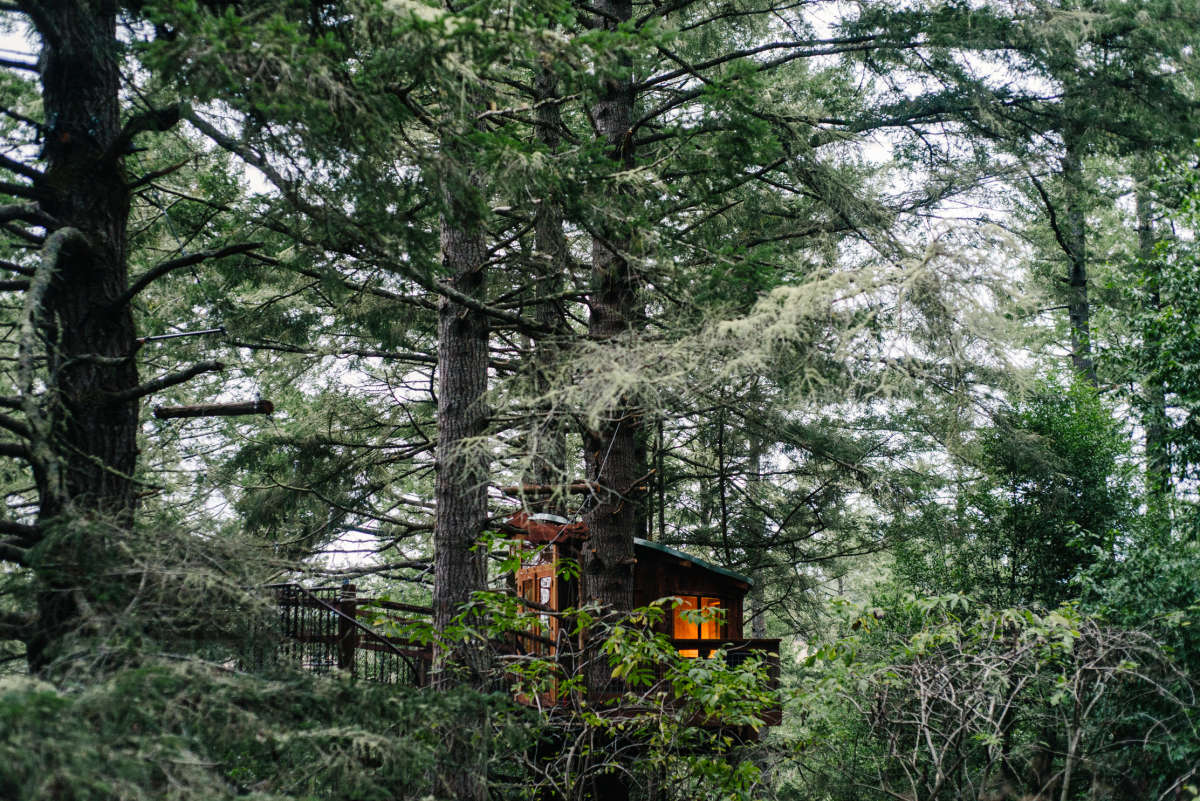 The Secret Life of a Treehouse Builder