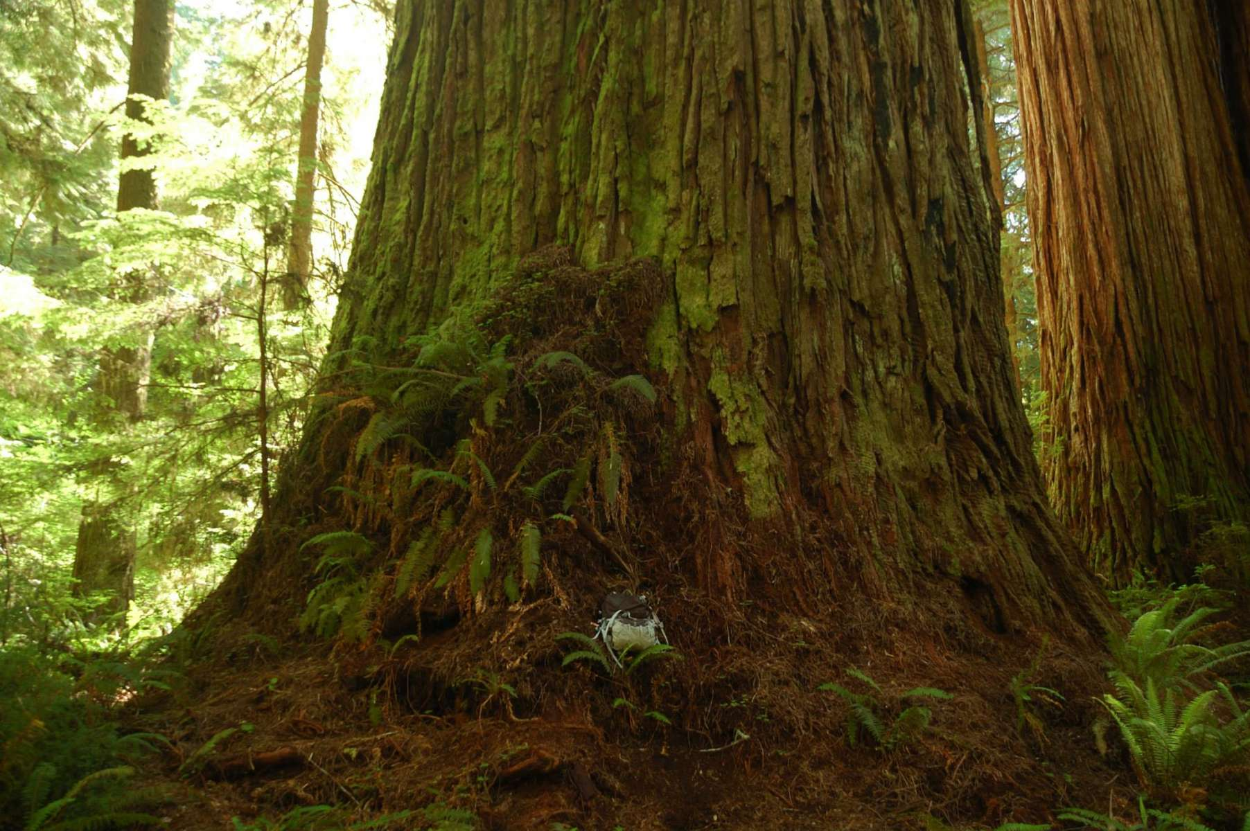 Best Camping In And Near Jedediah Smith Redwoods State Park